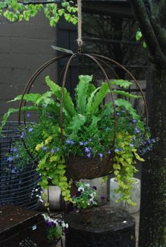 Bird's nest fern, lobelia, and creeping jenny in one of his grow spheres. by verna Bird's nest fern, lobelia, and creeping jenny in one of his grow spheres. by verna Container Plants, Container Gardening, Vegetable Gardening, Container Flowers, Indoor Gardening, Organic Gardening, Outdoor Plants, Outdoor Gardens, Air Plants