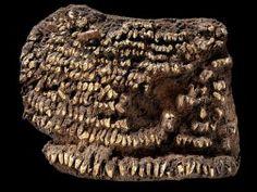 Ritrovata in Germania questa borsetta ornata di denti di cane risalente all'Età della Pietra