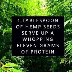 protein found in hemp seeds