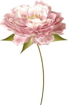 Antique Rose Flower