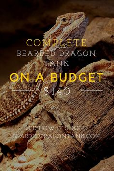 Can i keep a bearded dragoon in a cardboard box?