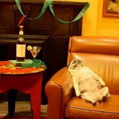 Parties too hard...