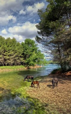 Beautiful World, Beautiful Places, Beautiful Pictures, Landscape Photography, Nature Photography, Nature Animals, Nature Scenes, Beautiful Horses, Farm Life