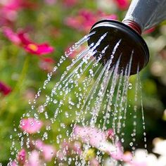 How and When to Water  http://www.rodalesorganiclife.com/garden/how-and-when-water