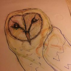 Barn owl xxx