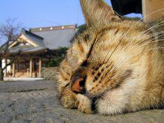 sleeping face by hamapenguin