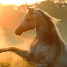 Horses All The Pretty Horses, Beautiful Horses, Majestic Horse, Animals Beautiful, Beautiful Images, Beautiful Creatures, Beautiful Things, Horse Ears, Horse Riding