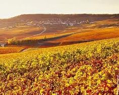 Changing colors on champagne vineyards