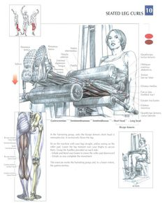 Seated leg curls. Join our community at https://www.facebook.com/ILoveFitnessBetaCoreHealth