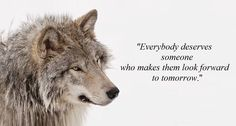 1090 Best wolf sayings and wolf wisdom en wolves quotes ...