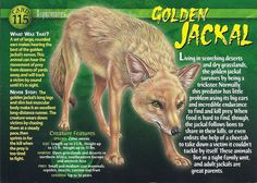 Name: Golden Jackal Category: Nightmares of Nature Card Number: 115 Front: Golden Jackal Nightmares of Nature Card 115 front Back: Golden Jackal Nightmares of Nature Card 115 back Trading Card: Wild Animals Pictures, Animal Pictures, Monster Book Of Monsters, Silhouette Clip Art, Interesting Animals, Wild Creatures, Animal Facts, Mundo Animal, Science And Nature