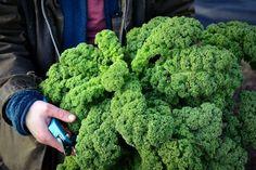 Vad passar väl bättre än att dagen före julafton skriva något om grönkål. Jag hoppas ingen köksträdgård står utan grönkål under året – det är en mycket värdefull grönsak. Grönkålsblad är supernyttiga, med flera hälsosamma effekter, och användbara på många sätt. Trots alla smaskiga rätter som går att klämma ner grönkål i brukar vi ändå...