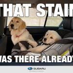 That stain was there already....   #pupppies #carseat #babies #kids #family #Subaru