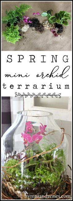 Spring Mini Orchid Terrarium