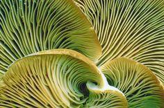 Fungus Formation