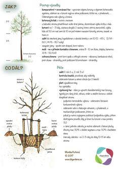 Kartičky návrhy — KT gardens ktgardens Land Art, Growing Plants, Indoor Plants, Gardens, Projects, Inside Plants, Outdoor Gardens, Garden, House Gardens