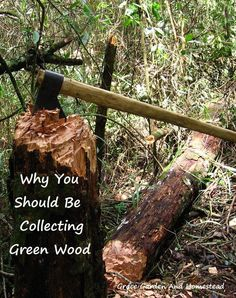 You can't burn green wood for another year. So why would you want to start collecting it now? Here are 10 excellent reasons.