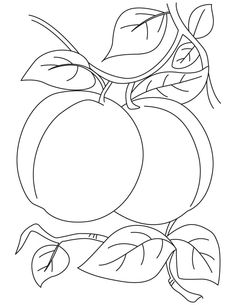 Pair of apricot coloring pages