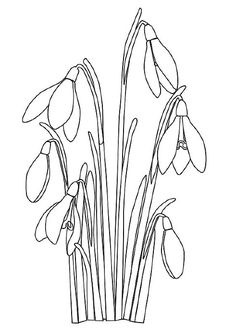 Click Snowdrop Flower Coloring page for printable version Flower Outline, Floral Drawing, Flower Coloring Pages, Linocut Prints, Fabric Painting, Coloring Sheets, Indian Art, Line Drawing, Easy Drawings