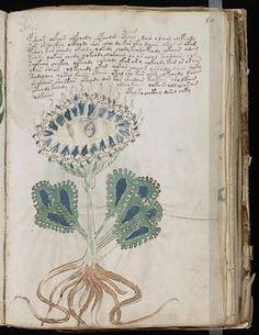 El archi famoso manuscrito Voynich