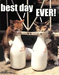 These 2 kitties are definitely the cat's that got the cream!