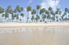 As melhores praias do sul de Pernambuco   Skyscanner