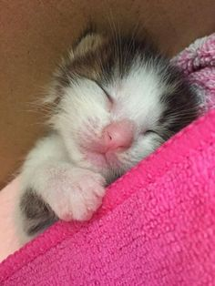 Cute Cat Names Rare for Cute Animals Saying Thank You where Cute Kittens Grey Cute Kittens, Fluffy Kittens, Newborn Kittens, Baby Kittens, Cats And Kittens, I Love Cats, Crazy Cats, Cute Cat Names, Baby Animals