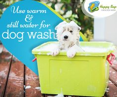 Too much rush in water can stress your dog buddy's bathtime!