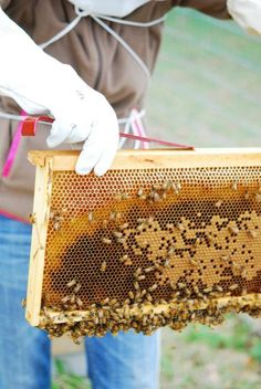 Organic fram in Bonifay, florida Beekeeping in action ... Twin Oaks