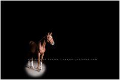 Hilltop Farm Foal