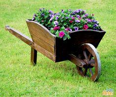 Carrinho de mão pode ser usado para cultivar flores.