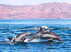 Dolphin tour, Ensenada