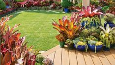 Garden of the week: A dazzling bromeliad-rich oasis Garden Prepping, Landscaping With Rocks, Tropical Backyard Landscaping, Bromeliads Garden, Tropical Garden Design, Bromeliads Landscaping, Bromeliads, Tropical Landscaping, Hanging Garden