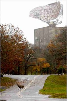 """COVERT SCIENCE-Montauk Project (pt1)-J.Pennik, 21, says abandoned military base Camp Hero in Montauk, NY, has'smart deer.' """"They follow you, watching silently, and it's unnerving. I tried scaring one-went up to him and yelled and he just stood there. Are even trained deer that laid back?"""" He speculates they're remote-viewing subjects; merely 1 facet of the fabulous Montauk tale, which touches base with nearly every conspiracy theory in existence. """"What are they up to? Sinister…"""