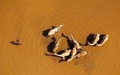 Africa from the air: Martin Harvey's aerial photos of landscapes and wildlife - Telegraph