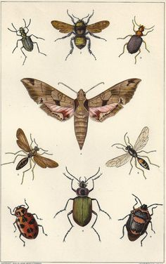 Antique Insects