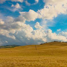 #Valdorcia #toscana #tuscany #field #crop #grain #siena