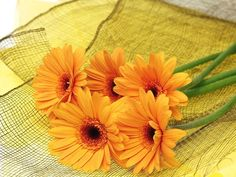 Photo of Gerberas for fans of Flowers 33763353 Modern Wedding Flowers, Winter Wedding Flowers, Fall Flowers, Yellow Flowers, Colorful Flowers, Beautiful Flowers Photos, Beautiful Flowers Wallpapers, Prettiest Flowers, Diy Wedding Flower Centerpieces