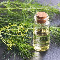 Estrogen - like 6 Benefits of Fennel Essential Oil of Which Help Your Gut! Fennel Essential Oil, Essential Oil Uses, Benefits Of Fennel, Oil Benefits, Getting Rid Of Gas, Fennel Oil, Healing Oils, Natural Healing, Cinnamon Oil