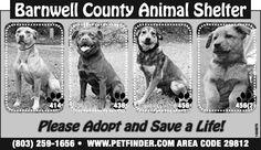 Barnwell County Animal Shelter ad  5-15-13