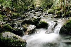 Tributary stream to the Styx river, West Coast, Sth Island, NZ