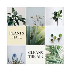 All plants have the ability to purify the air. However, some plants do it more than others. Here you can read about the best luffing plants. Place them in your home and they will automatically clean the air. All Plants, Place Cards, Place Card Holders, Cleaning, Home Cleaning