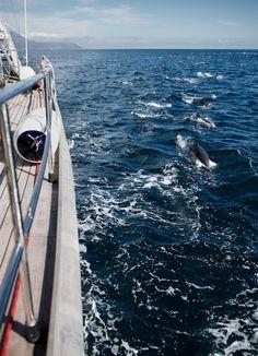 Capturado en video raro encuentro con súper manada de miles de delfines - Rare encounter with dolphin super pod captured on video