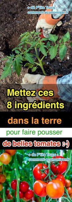 Voici 8 trucs à mettre dans vos plants de tomates pour avoir de belles et grosses tomates pleines de goût. Regardez :-) Découvrez l'astuce ici : http://www.comment-economiser.fr/8-ingredients-dans-terre-pour-faire-pousser-belles-tomates.html?utm_content=bufferd0ea2&utm_medium=social&utm_source=pinterest.com&utm_campaign=buffer
