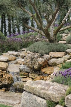 olive grove garden - Google Search