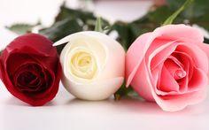 wallpaper hd flowers rose - Căutare Google