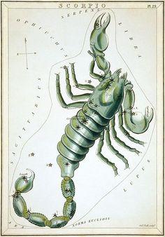 """Scorpio"", plate 23 in Urania's Mirror"