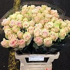 Rose Chrystal. Larger