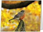 Fall Robin by ASnippetInTime on Etsy, $3.50