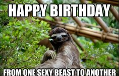 Funny pictures about Sassy sloth. Oh, and cool pics about Sassy sloth. Also, Sassy sloth photos. Primates, Mammals, Beautiful Creatures, Animals Beautiful, Pinterest Foto, Animal Pictures, Funny Pictures, Happy Birthday Best Friend, Sloth Happy Birthday